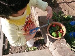 発達障害・自閉症のカンタン家庭療育 家庭菜園でケーキ作り