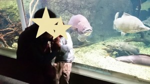 カンタン家庭療育 水族館 大きな魚