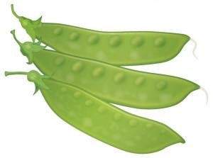 サヤエンドウ/豆